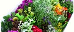 Photo1: 大西ハーブ農園 - ハーブサラダミックス Oonishi Herb Nouen - Herb Salad Mix