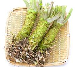 Photo1: 細根付わさびLサイズ, Fresh Wasabi